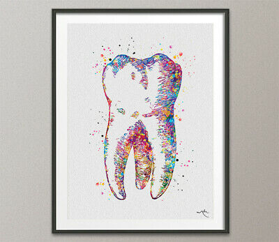 Human Tooth Watercolor Print Tooth Anatomical Art Dental Art Dentist Office Art