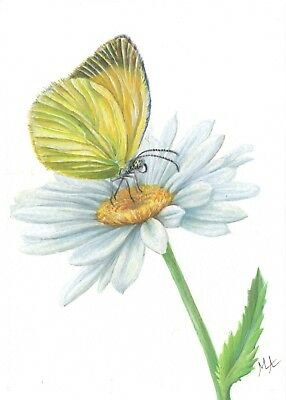 """ORIGINAL Watercolour Painting 5""""x7""""- Butterfly on Daisy Flower by Mila Ansell"""