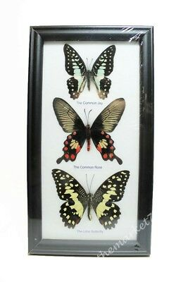 3 Real Butterflies Framed, Insect Wall Hanging, Bugs, Entomology, Home Decor NEW