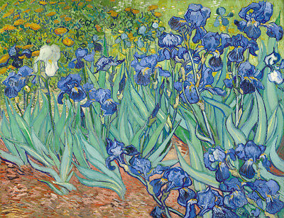 Vincent Van Gogh Irises Oil Painting Print on canvas home Decor Art wall picture