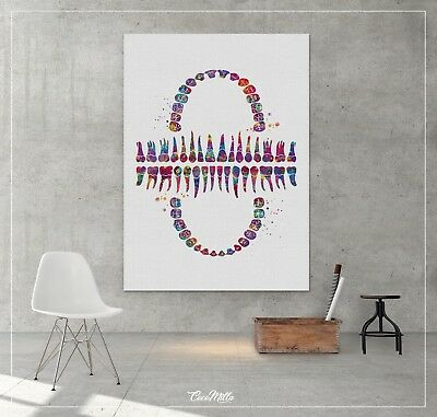 Tooth Chart Canvas Watercolor Print Tooth Anatomical Art Dental Clinic Office