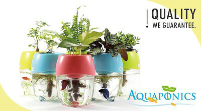 Aquaponic Aquarium for Betta Fish Tank Water Garden Planter Natural Ecosystem