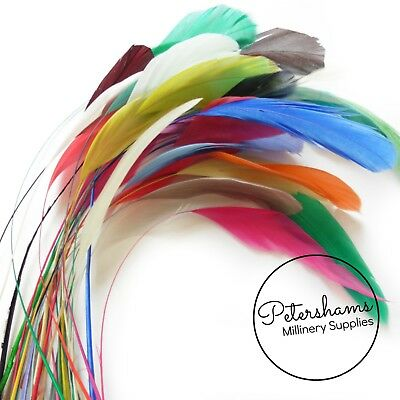 Loose Stripped Coque Feathers for Millinery & Hat Making - Pack of 10