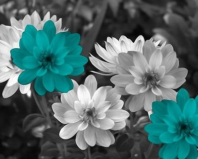 Black White Teal Home Decor, Teal Flowers, Modern Wall Art Matted Picture