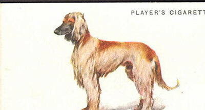 DOG Afghan Hound, Nice Breed Trading Card, 1931