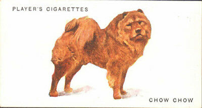 DOG Chow Chow Chinese, Nice Breed Trading Card, 1931
