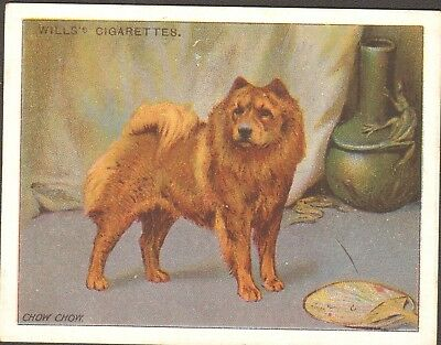 DOG Chow Chow, Antique 1915 Trading Card
