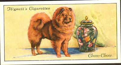 DOG Chow Chow, Small British Trading Card 1936