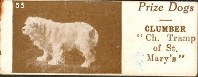 DOG Clumber Spaniel (Named) Very Rare, Small Photo Trading Card, 1924
