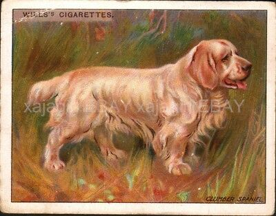 DOG Clumber Spaniel, Antique 1915 Trading Card