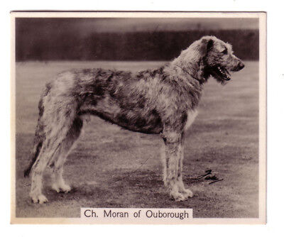 DOG Irish Wolfhound Named, Photo Trading Card, 1938