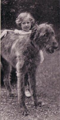 DOG Irish Wolfhound, Photo Trading Card, 1930s