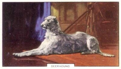DOG Scottish Deerhound, Colorful Trading Card, 1930s