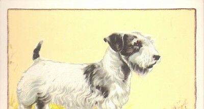 DOG Sealyham Terrier, Large Color Trading Card, 1934