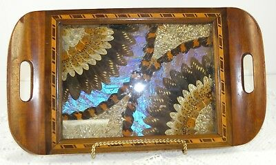 Antique BUTTERFLY WING Wood Tray Inlaid Marquetry BRAZIL Rio de Jan IRIDESCENT