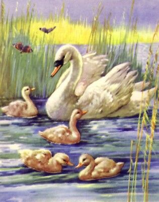 BIRD Swan Family & Butterfly, 70-yr-old CHILDRENs Print