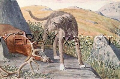 DOG Scottish Deerhound, 85+ Year Old ANTIQUE Print
