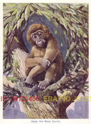 Gorilla Infant, by AE Kennedy, 1920s CHILDREN's Print