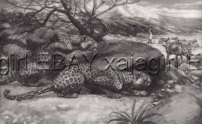 Leopard vs Shepherd 1890s Antique Collotype by Caldwell