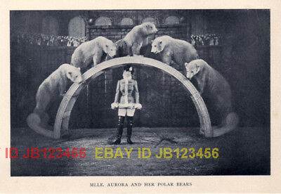Polar Bear Trained in Circus, 100+ Yr Old Print WOW