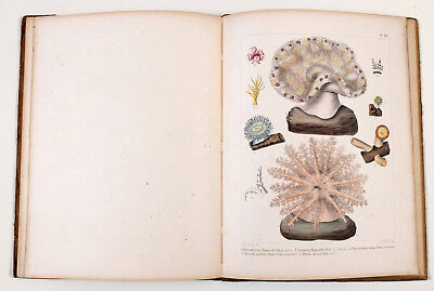 1877 Germany CORALS of the RED SEA Book Album KORALLTHIERE des ROTHEN MEERES