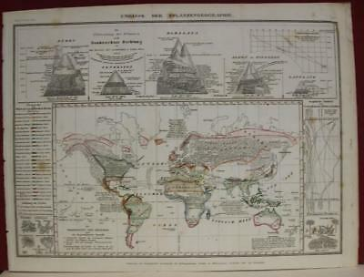 1852 Meyer Unusual Map Showing The Distribution Of Vegetation Over The World