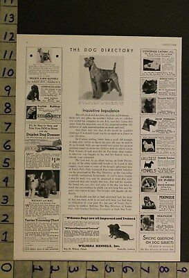 1933  Dog Canine English Bull Terrier Puppy Breeder Photo Ad Ru30