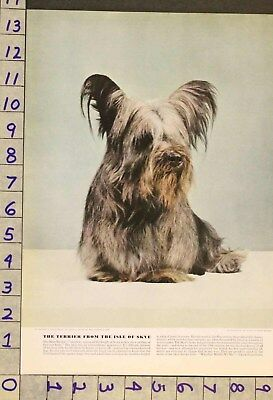 1941  Dog Canine Skye Terrier Toy Breeder Waxman Photo Print Ru72