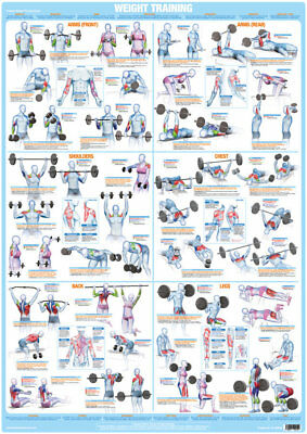 Weight Training Bodybuilding Exercise Poster Barbell Dumbbell Workout Chart