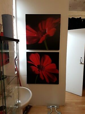 Two large flower prints from Next - black and red - gorgeous