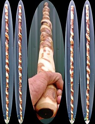 6 ft Awesome Vine Twisted Walking Hiking Stick Sycamore Wood Wizard Staff USA