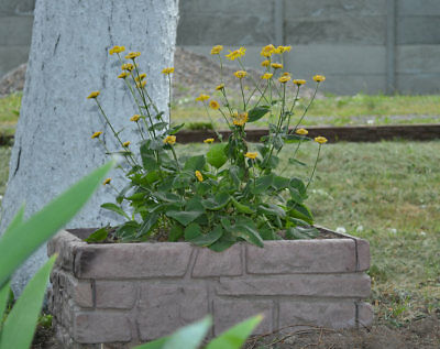 Sold Mold for Concrete Decor Flower Garden Protection flower beds#F07