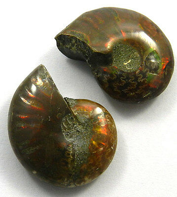 Shining Gems,11.49GM Sparkle 1 Pair NATURAL AMMONITE FOSSIL 19x26MM cab gemstone