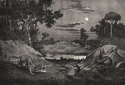 African Leopard Hunting, Bait Goat Large 1870s Antique Engraving Print & Article