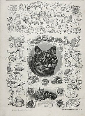 CAT Beautiful Sketches & Studies of Cats, Large 1870s Antique Engraving Print