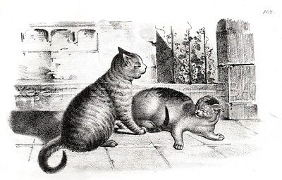 CAT Two Cats Play Fighting, Antique 1837 Engraving Print (175 Years Old)