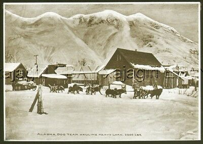 DOG Alaskan Malamute Sled Dog Team ALASKA c1912 Antique Collotype Print