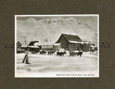 DOG Alaskan Malamute Sled Team Pulling Alaska, Rare Antique 1905 Collotype Print