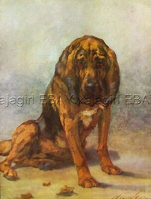 DOG Bloodhound, Beautiful 1930s Color Linen Print by Maud Earl