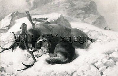 DOG Border Collie & Deer Stag, Sir Edwin Landseer Antique Collotype Print 1870s