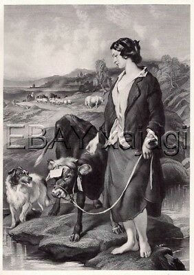 DOG Border Collie, Prize Calf Cow, Antique Landseer Collotype from 1870s