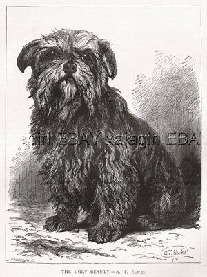 """DOG Cairn Terrier """"The Ugly Beauty"""", Antique 1874 Engraving Print"""