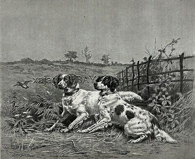 Dog English Setter Pair Points Quail Breed ID'd, Large 1880s Antique Print