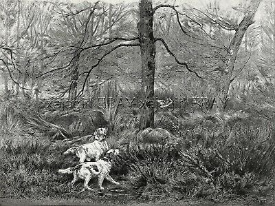 Dog English Setter Pair Points Woodcock, Breed ID'd, Large 1880s Antique Print