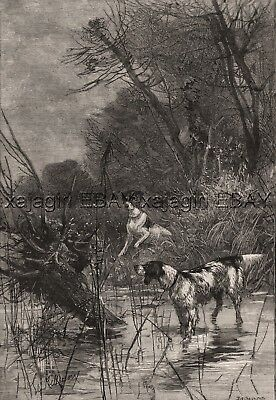 Dog English Setter Points Rabbit in Creek, Large 1880s Antique Print
