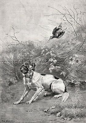 Dog English Setter, Bird Shot Above Its Head FIREARMS, Large 1880s Antique Print
