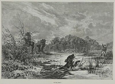 Dog Flat-Coated Retriever Falls In Ice Hunting Snipe, Large 1880s Antique Print