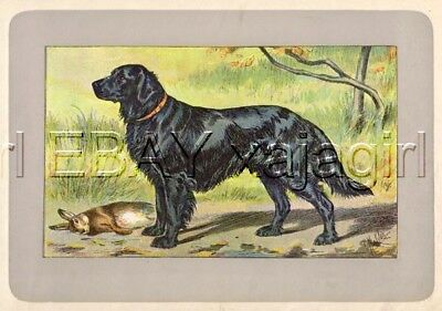 DOG Flat-Coated Retriever, Rare Antique 100-Year-Old French Dog Print