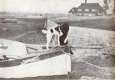 DOG Fox Terrier Wire Haired & Black Persian Cat Friends, Vintage Print 1930s