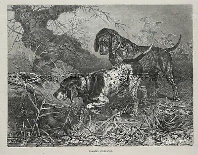 Dog German Shorthaired Pointer (Breed ID'd), Solid & Ticked, 1880s Antique Print